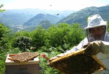 L'abeille vie : apiculteurs