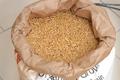Farine de Blé Khorasan (Kamut®) ~ 1 kg