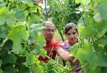 Vignerons des Vignerons de Tutiac