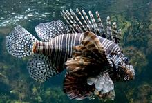 Bullinada traditionnelle de poissons de roche et crustacés