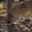 Truffe Gravier