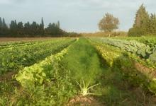 sauvaget nicolas / les paniers du maraicher 66