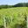 Domaine Du Loup Des Vignes