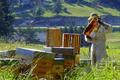 Franck Repellin, apiculteur