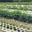 le jardin de la Dupré