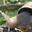 l'escargot du Prieuré