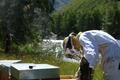 Gilles ROche, écrin de miel, apiculteur