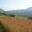 GAEC du Thicaud - Ferme Cochet
