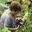Les Jardins de la Côte-Rôtie,  Domaine Chambeyron-Manin
