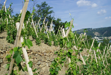 Domaine Clusel Roch