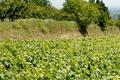 Domaine Aurélien Chatagnier