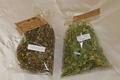 Coopérative de ramassage de plantes de chartreuse
