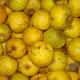 """Pommes """"Canada blanche"""" - Sachet de 2kg / Pommes BIO"""