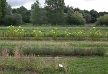 L'herbier De St Fiacre, Le Jardin Des Sens