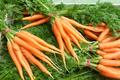 carottes botte BIO