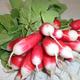 radis rose botte