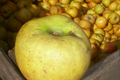 Pommes Belchard Chanteclerc