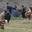 Le Logis Du Plessis, Maignan volailles
