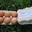 6 oeufs de poules en plein air