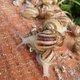 Limero l'escargot mayennais