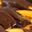 La Chocolatiere de Marseille