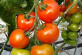 Tomate cocktail / Campari