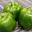 Poivron Vert traditionnel