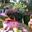 Jardin du Clos Fleuri