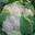 Choux Fleur Bio