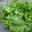 Salade Bio Batavia