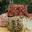 Crottin de brebis au poivre/paprika