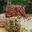 Crottin de brebis aux fines algues