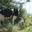 Ferme des Tilleuls, vaches laitières
