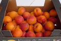 Abricots cagette carton 1,5 kg