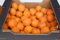 Abricots déclassés pour confitures