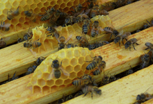 L'arc en miel, bruno Bondia apiculteur