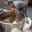 Deck & Donohue, brasserie artisanale
