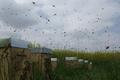 Pierre GASCHIGNARD, apiculteur