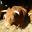 Production et vente directe de viande limousine à la ferme !