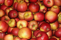 pur fus de pomme melrose