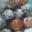 Bouchons de chèvre frais x 12 - Panaché