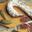 Saucisse de canard sèche, Ferme de Larcher