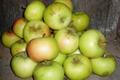 Pomme Reinette Dorée (ancienne variété)