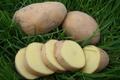 Pommes de terre Monalisa