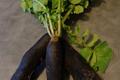 Radis noir avec fane sans pesticides