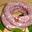 Saucisse de « Toulouse » porc noir Gascon