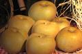 Pommes Reinette grise du Canada