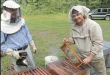 Apidis, les ruchers de Bourgogne