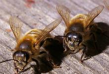 miel de sully