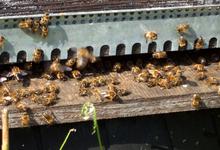 les ruchers de l'Arvière